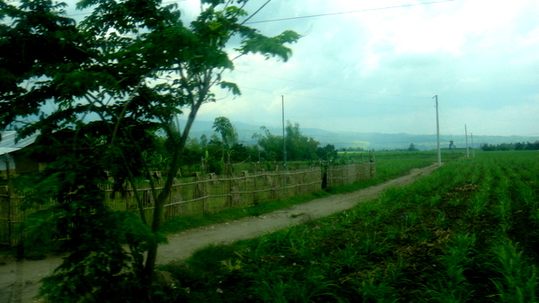 The road to San Carlos City