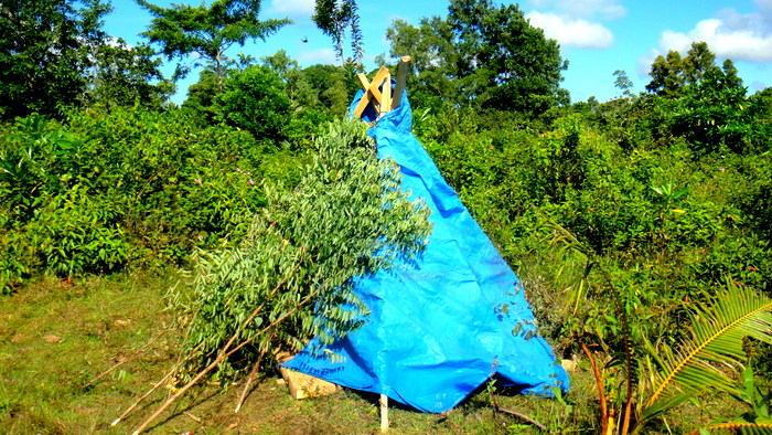 Native American tipi cover uses tree branches