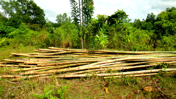 bamboo for the niap hut
