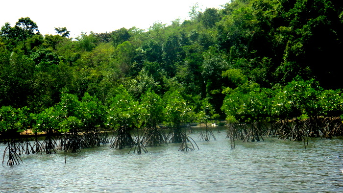 handbook of mangroves in the philippines
