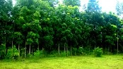 lots-of-trees-on-our-guimaras-property