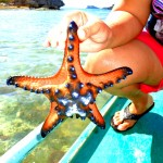 star fish found off raymen beach