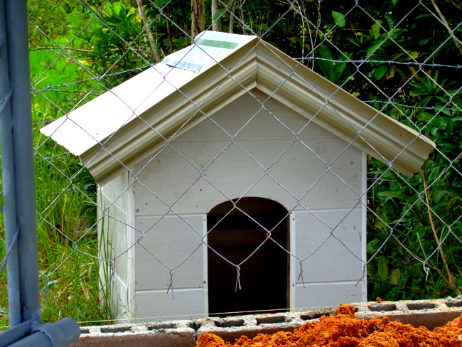 Our new doghouse in the Philippines