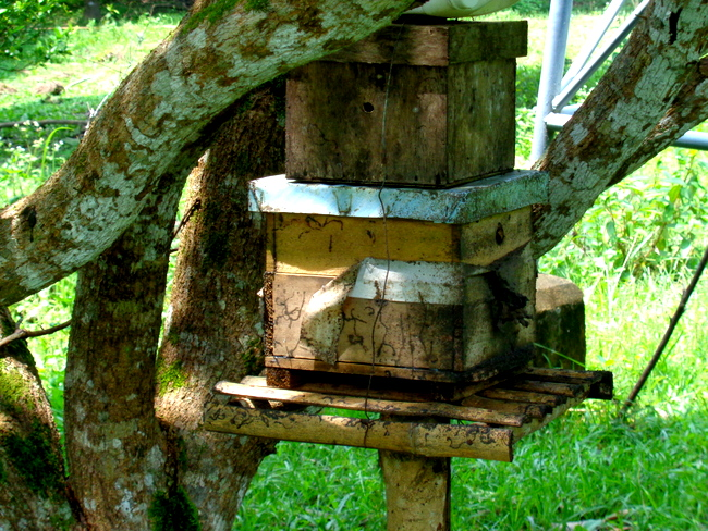 native bee hive in guimaras