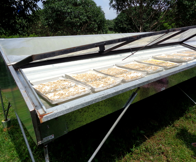 solar panel to dry seeds at wonder farms, guimaras
