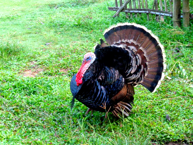 another look at that turkey in the philippines