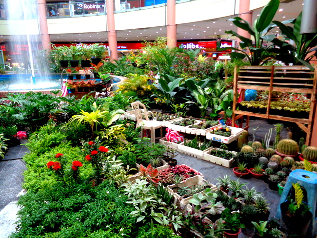 large selections of plants and flowers at robinsons plant sale