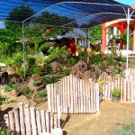 Another Look at Our New Garden in the Philippines