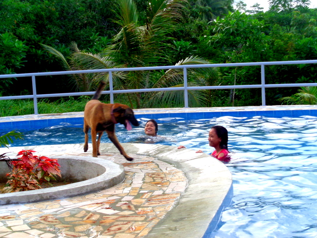 our belgian shepard in our new philippine swimming pool