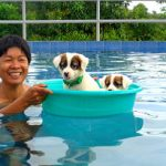 Proper Pooch Pool Party Philippines