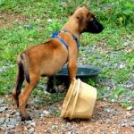 Conclusion: Dog Dispute Delivers Dispatch from Barangay Captain