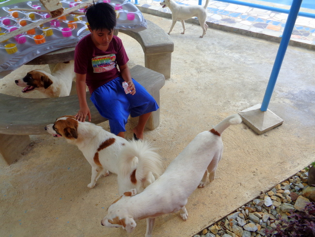 our philippines pups