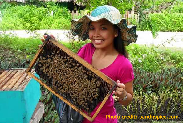 Beekeeping: Becoming Self-Sufficient in the Philippines