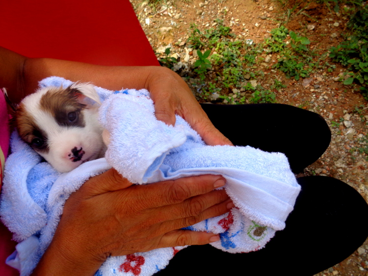 Lovingly dried off in a soft bath towel - Philippines Pampered Perky Pups