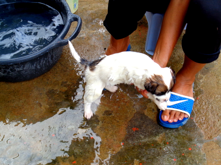 The puppy fun continues - Philippines Pampered Perky Pups