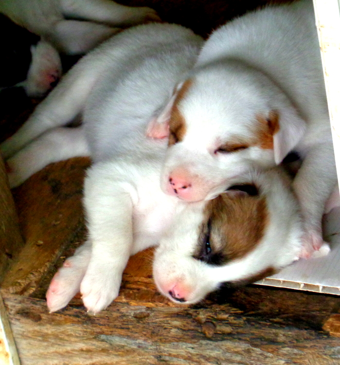 The young pups - Philippines Pampered Perky Pups