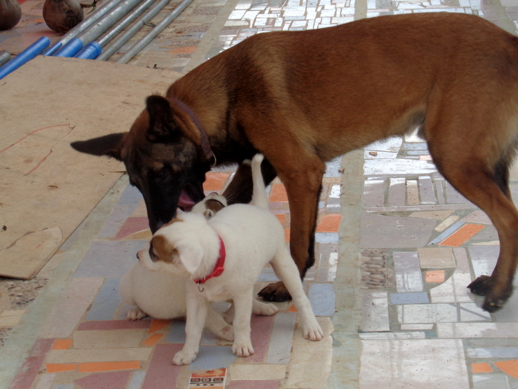 Uncle Killer and friend - Philippines Pampered Perky Pups