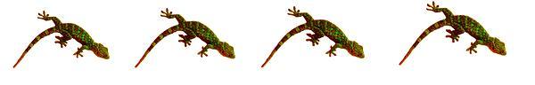 lizard ratings