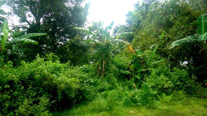 a look at our property in guimaras
