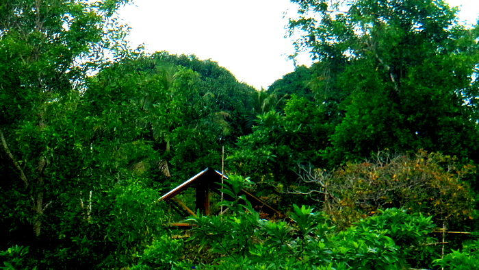 our property in guimaras