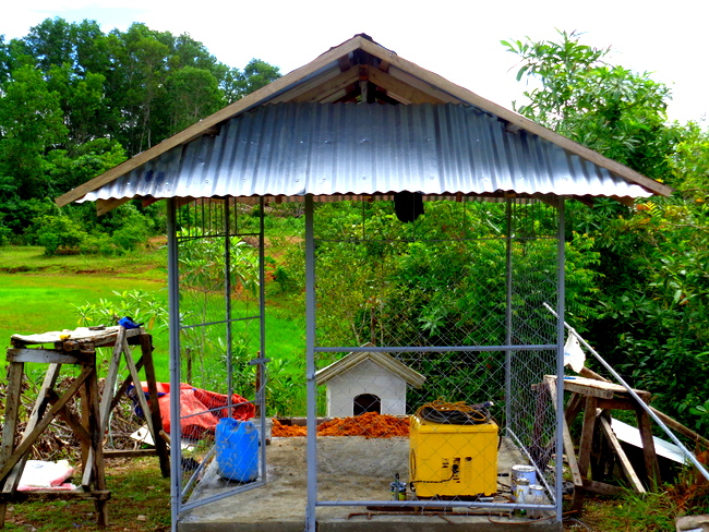 Our new dog shelter in the Philippines