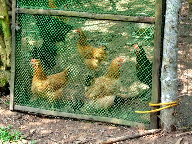 eggs are sold at atrium in iloilo city