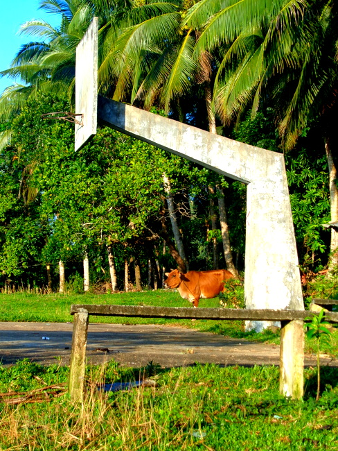 basketball court and cow in the philippines