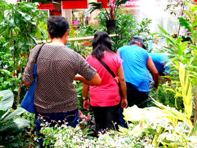 checking out more plants at iloilo robinsons