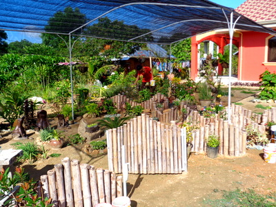 our new garden in the philippines