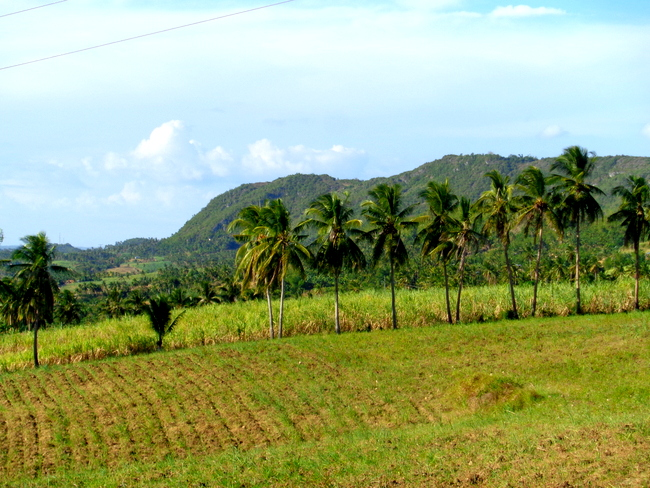 province outside of cebu, the simple life