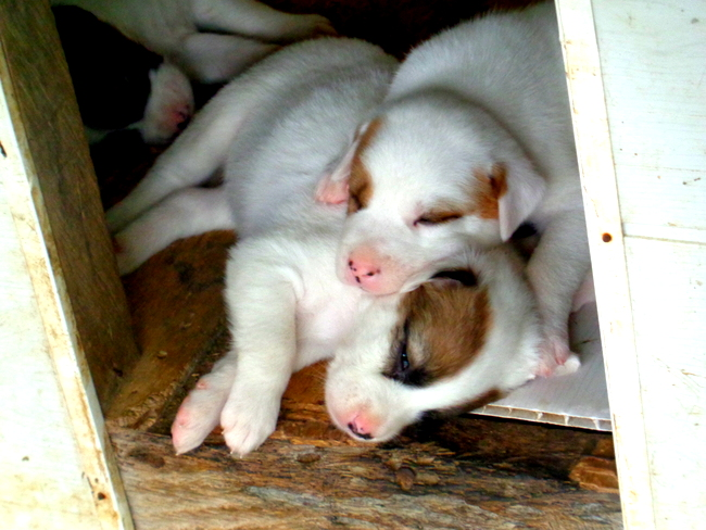 our new puppies in the philippines