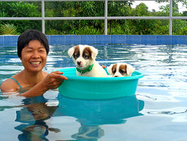 Pooch Party Philippines - Proper Pooch Pool Party Philippines