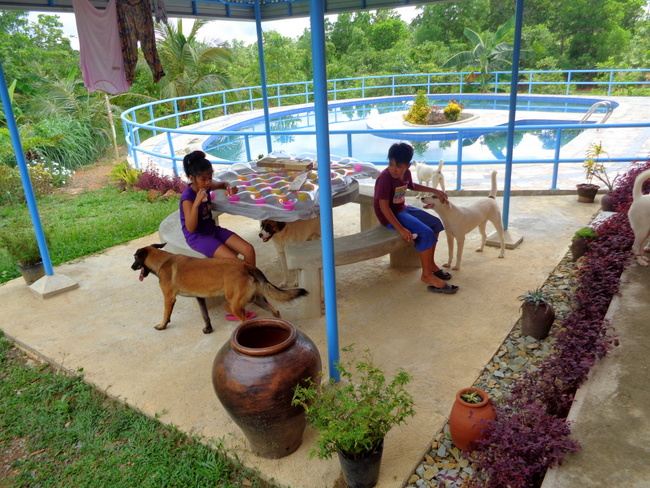 pooches hang out by philippines pool