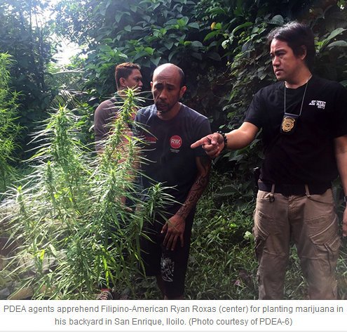 American growing marijuana busted; Guimaras next PDEA target?
