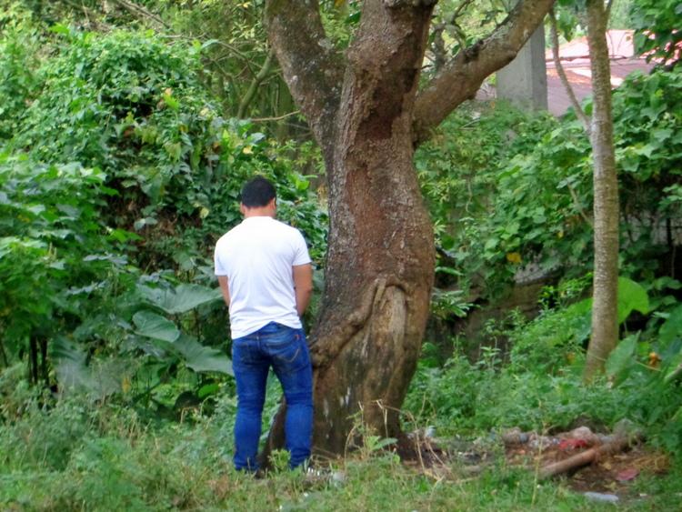 Guimaras pee tree - To Pee Or Not To Pee