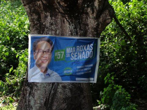 Guimaras pee tree 480x360 - Lawbreakers & Other Guimaras Scofflaws