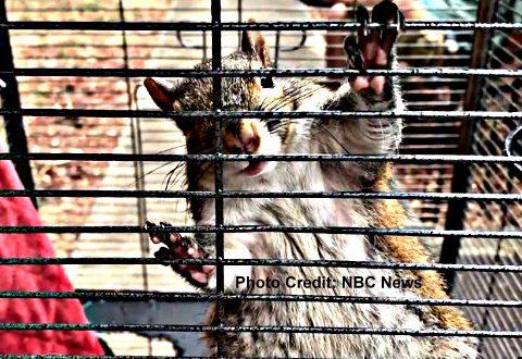 """shabu fueled attack squirrel 480x330 - Shabu-Fueled """"Attack Squirrel"""""""