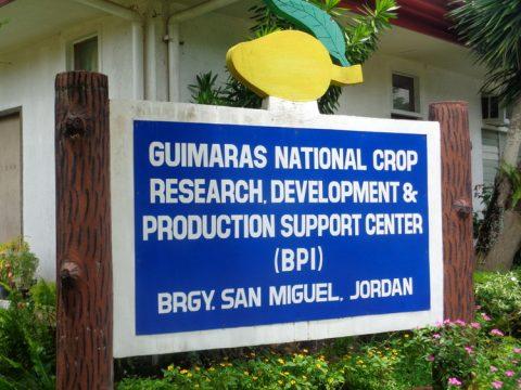 BPI Bureau of Plant Industry San Miguel Jordan Guimaras entrance 480x360 - Breathtaking BPI's Magnificent Mangoes