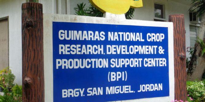 BPI Bureau of Plant Industry San Miguel Jordan Guimaras entrance 668x334 - Breathtaking BPI's Magnificent Mangoes