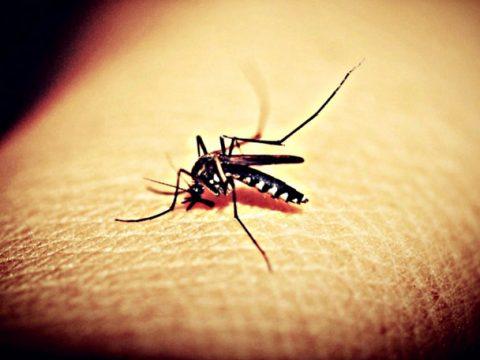 Mosquitoe Mosquito Malaria Free photo on Pixabay 480x360 - Dengue Exceeds Epidemic Threshold