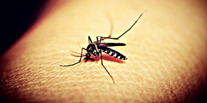 Mosquitoe Mosquito Malaria Free photo on Pixabay 668x334 - Dangerous Dengue Outbreak Bites Guimaras