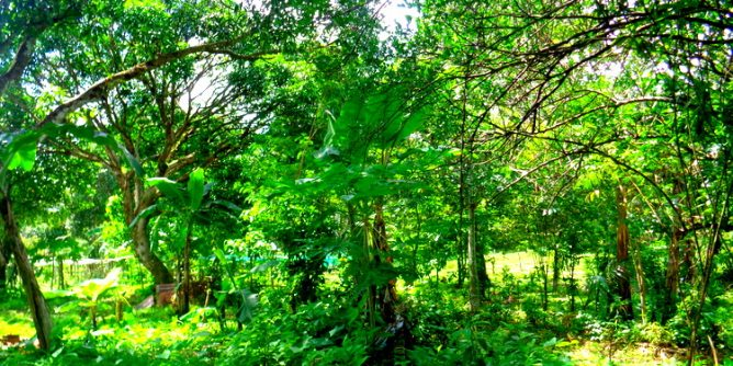 Sustituido Farm Concordia Sur Nueva Valencia Guimaras 668x334 - Guimaras' Thriving Tourism Farm: Sustituido