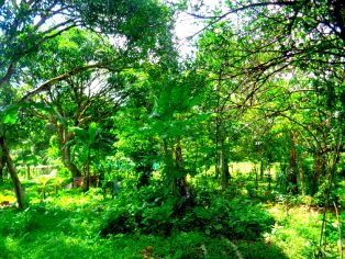 Guimaras' Thriving Tourism Farm: Sustituido