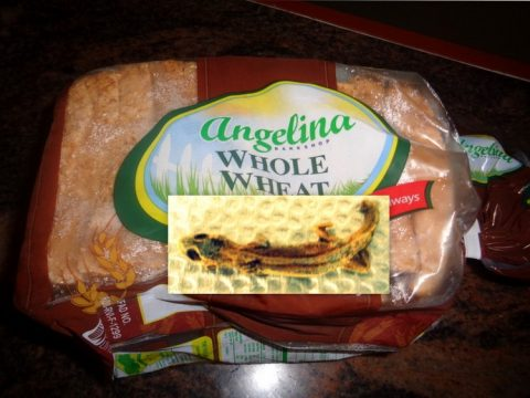 bread lizard 1 480x360 - Dead Lizard Found in Angelina Whole Wheat Bread